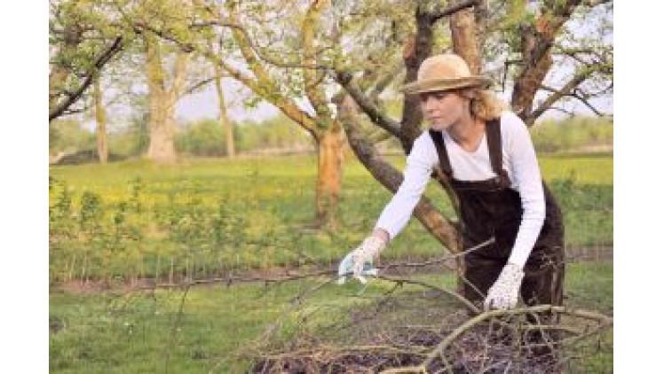 Вересень в саду і на городі
