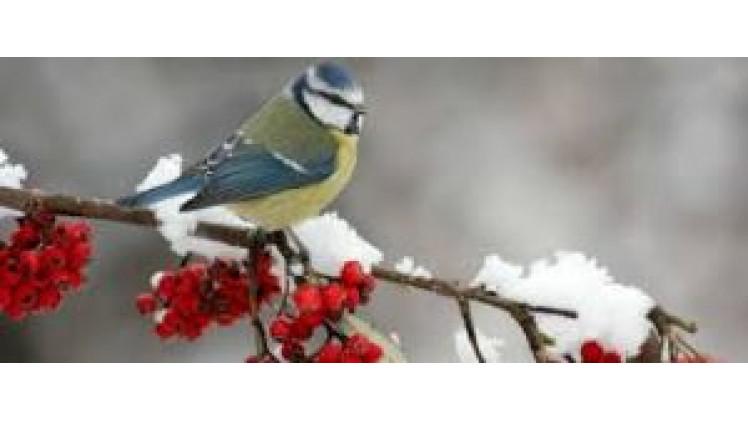 Погода в Ковелі   14 – 21 грудня