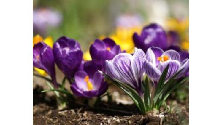 Погода в Ковелі  2 - 8 квітня