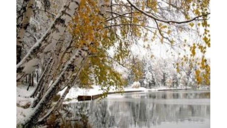 Погода в Ковелі  16–22 січня
