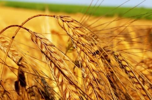 Украина увеличила экспорт зерновых из морских портов